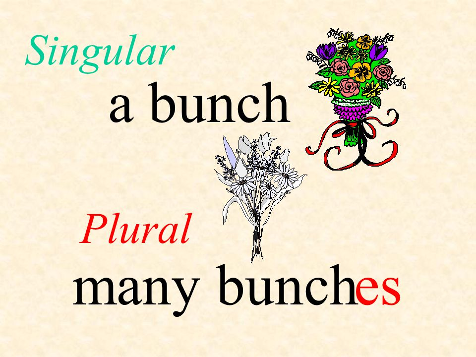 Singular a bunch Plural many bunch es