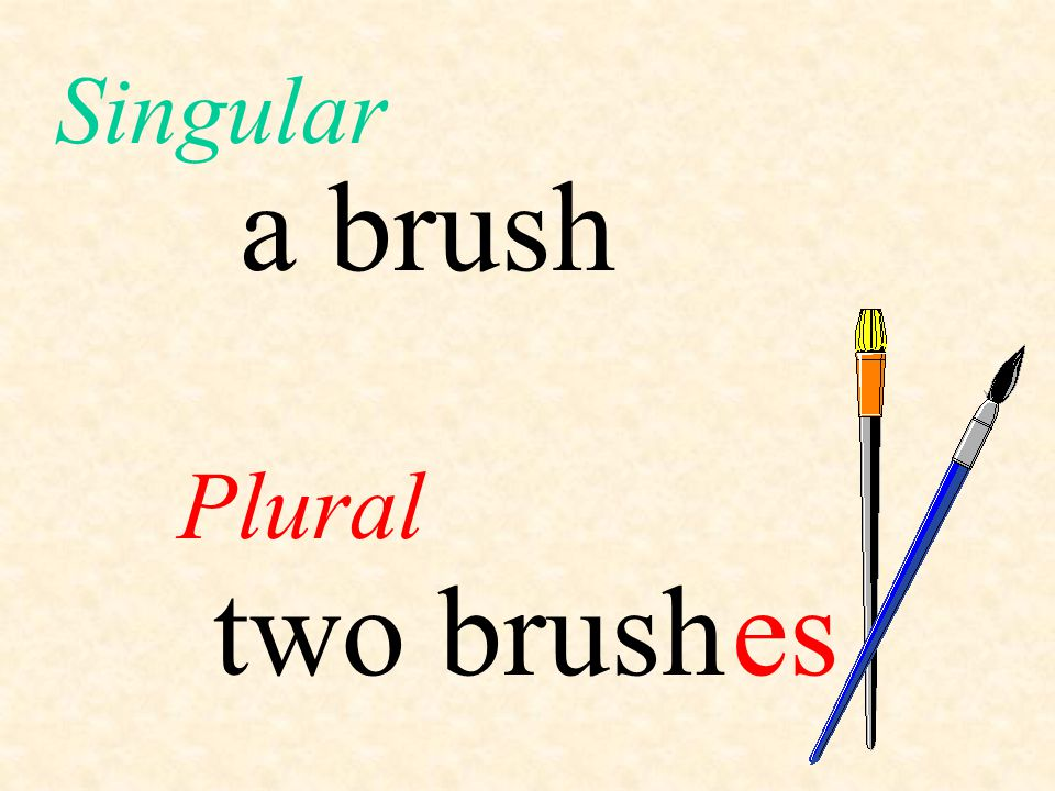 Singular a brush Plural two brush es