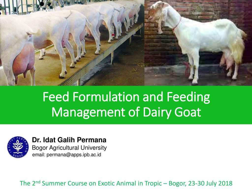 Feed Formulation and Feeding Management of Dairy Goat - ppt download
