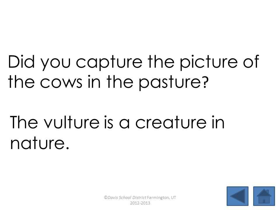Did you capture the picture of the cows in the pasture