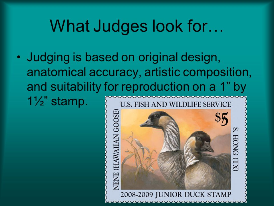 What Judges look for…