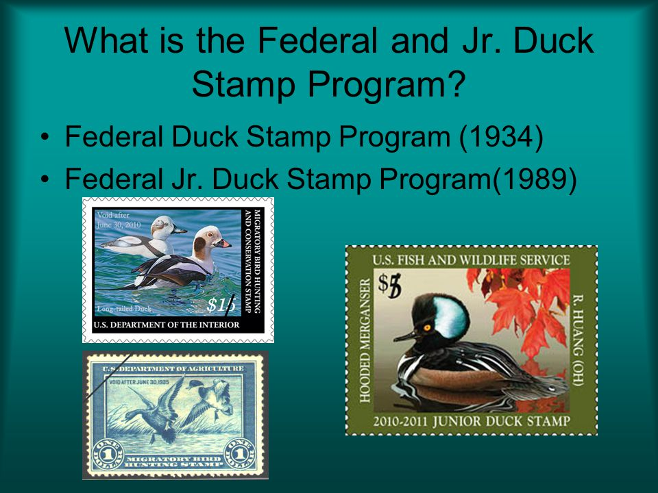 What is the Federal and Jr. Duck Stamp Program