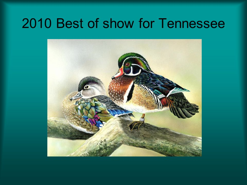 2010 Best of show for Tennessee