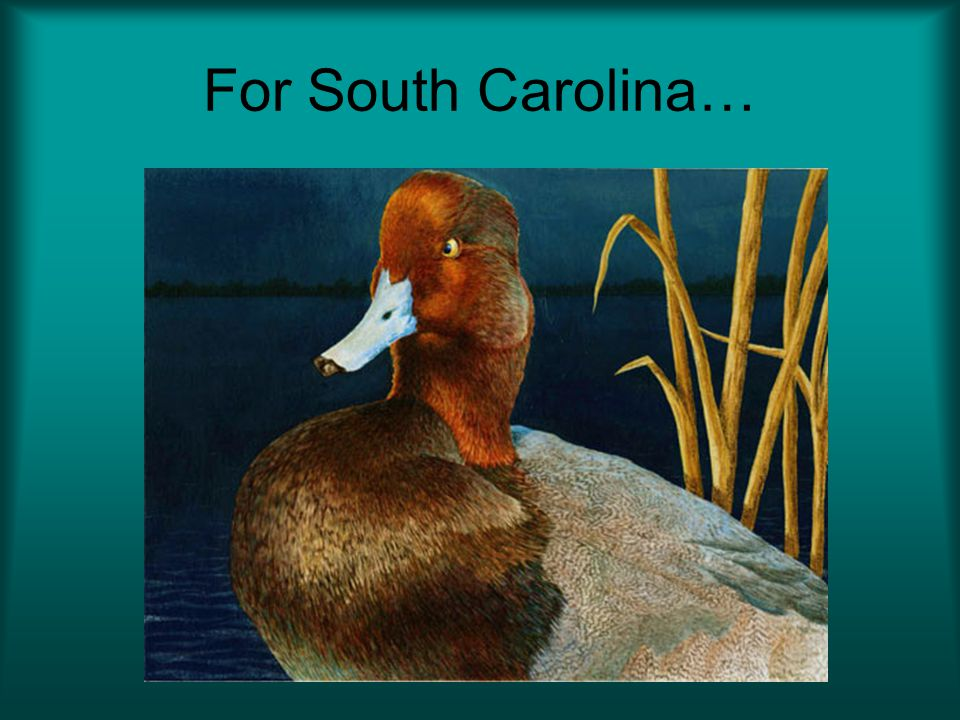 For South Carolina…