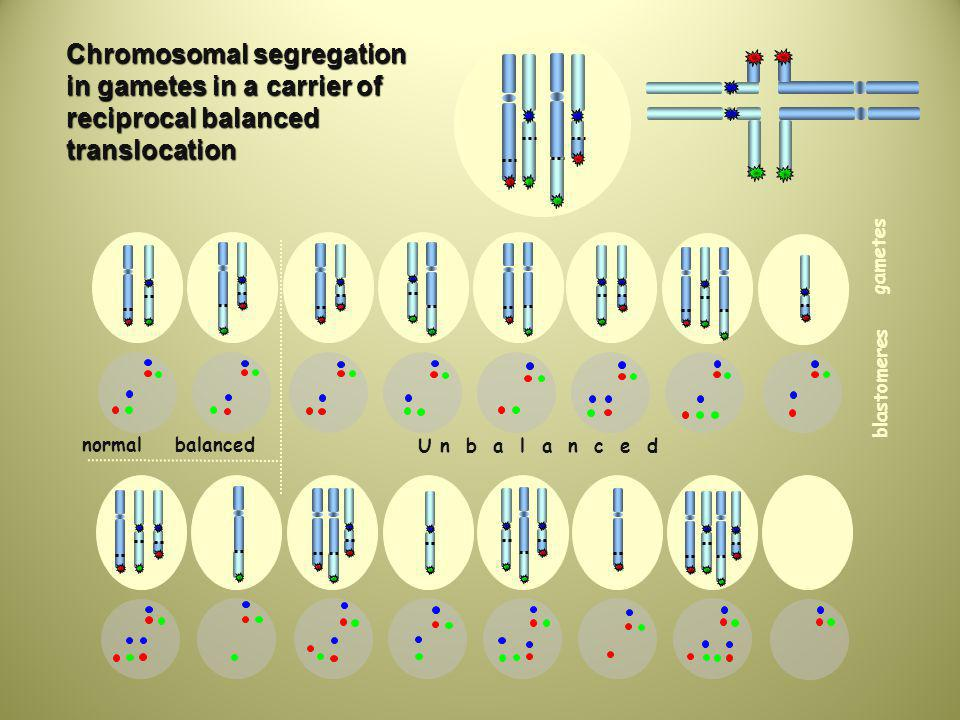 Chromosomal segregation in gametes in a carrier of reciprocal balanced translocation