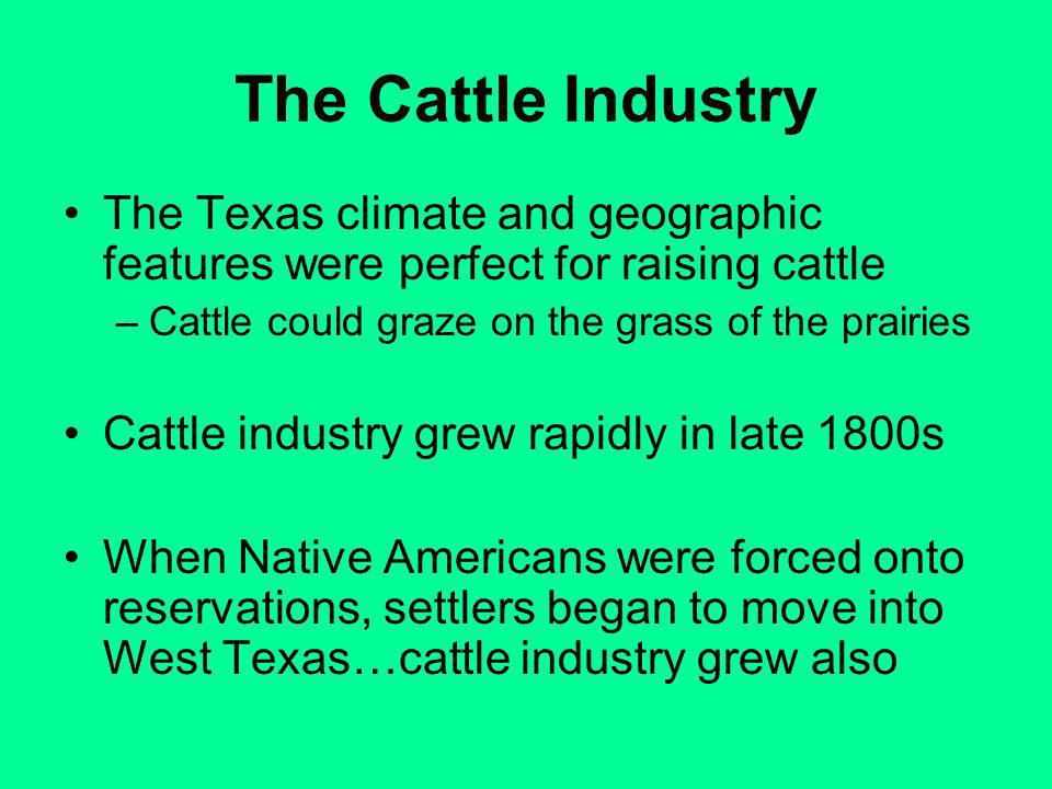 The Cattle Industry The Texas climate and geographic features were perfect for raising cattle. Cattle could graze on the grass of the prairies.