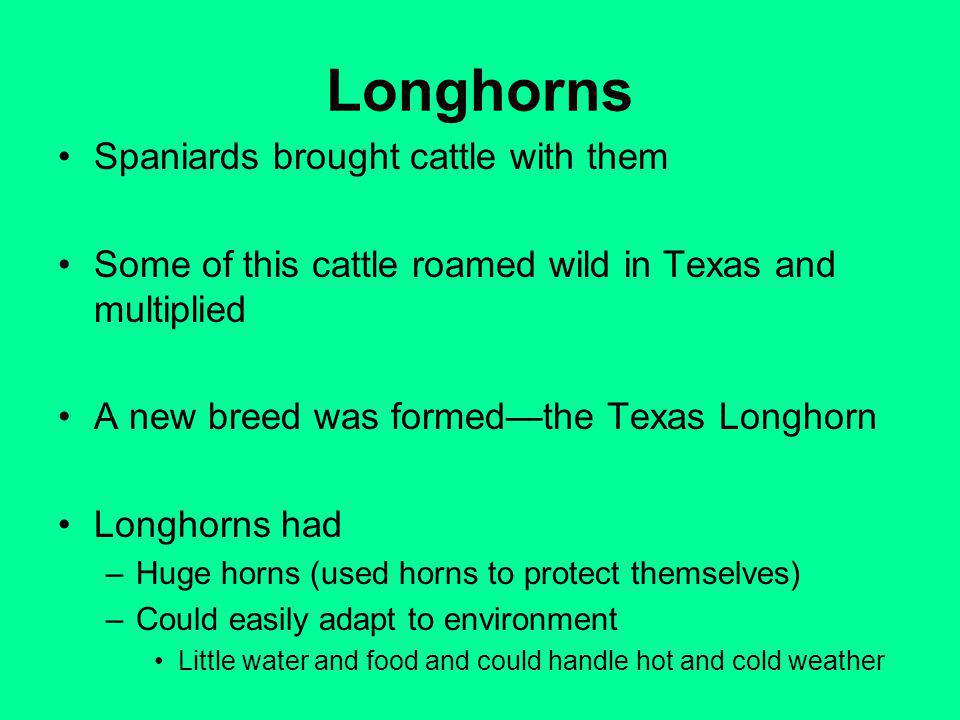 Longhorns Spaniards brought cattle with them