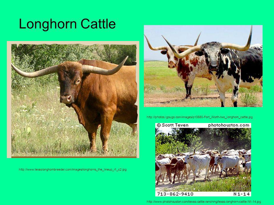 Longhorn Cattle http://photos.igougo.com/images/p10680-Fort_Worth-two_longhorn_cattle.jpg.