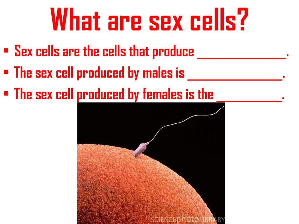 production-of-sex-cells-hot-babes-solo-videos