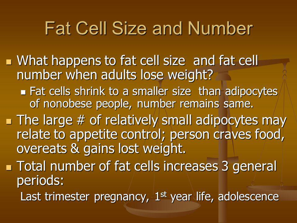 Fat Cell Size and Number