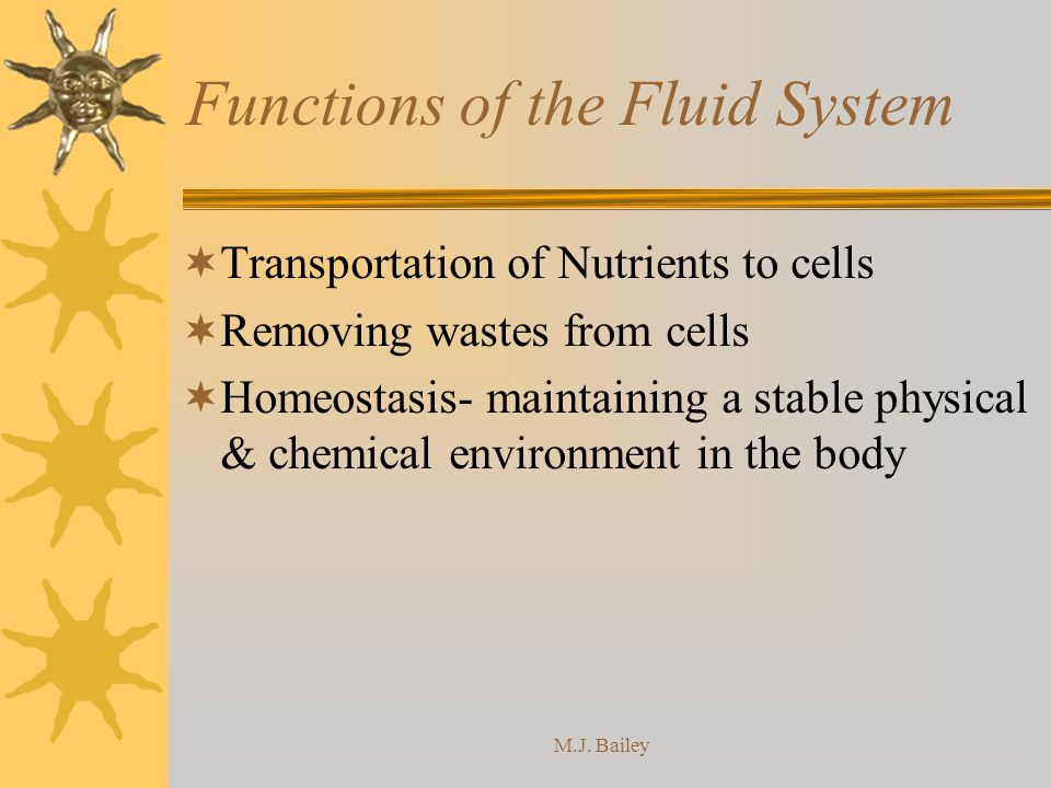 Functions of the Fluid System