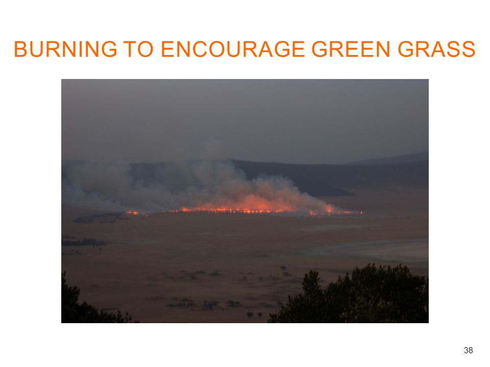BURNING TO ENCOURAGE GREEN GRASS