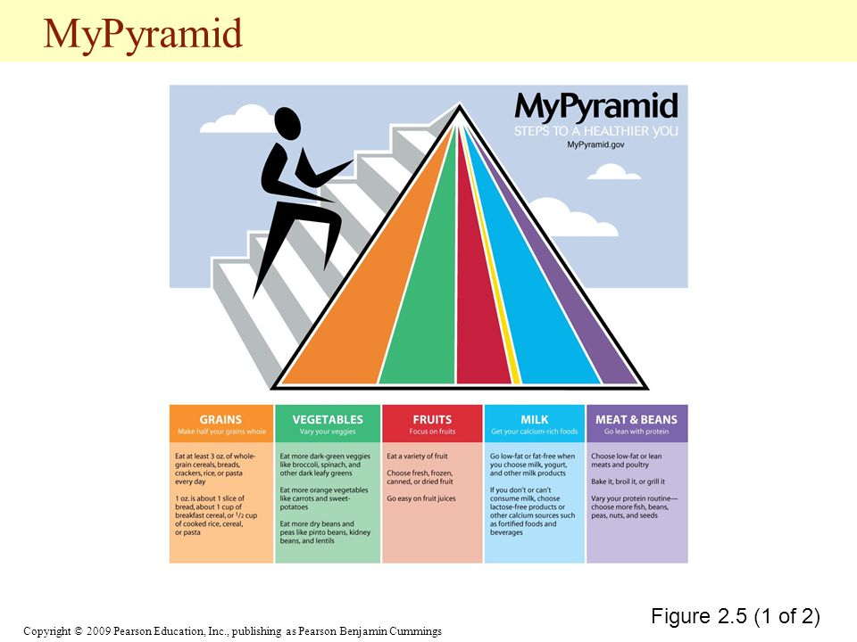 MyPyramid Figure 2.5 (1 of 2)