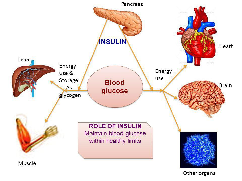 Maintain blood glucose within healthy limits