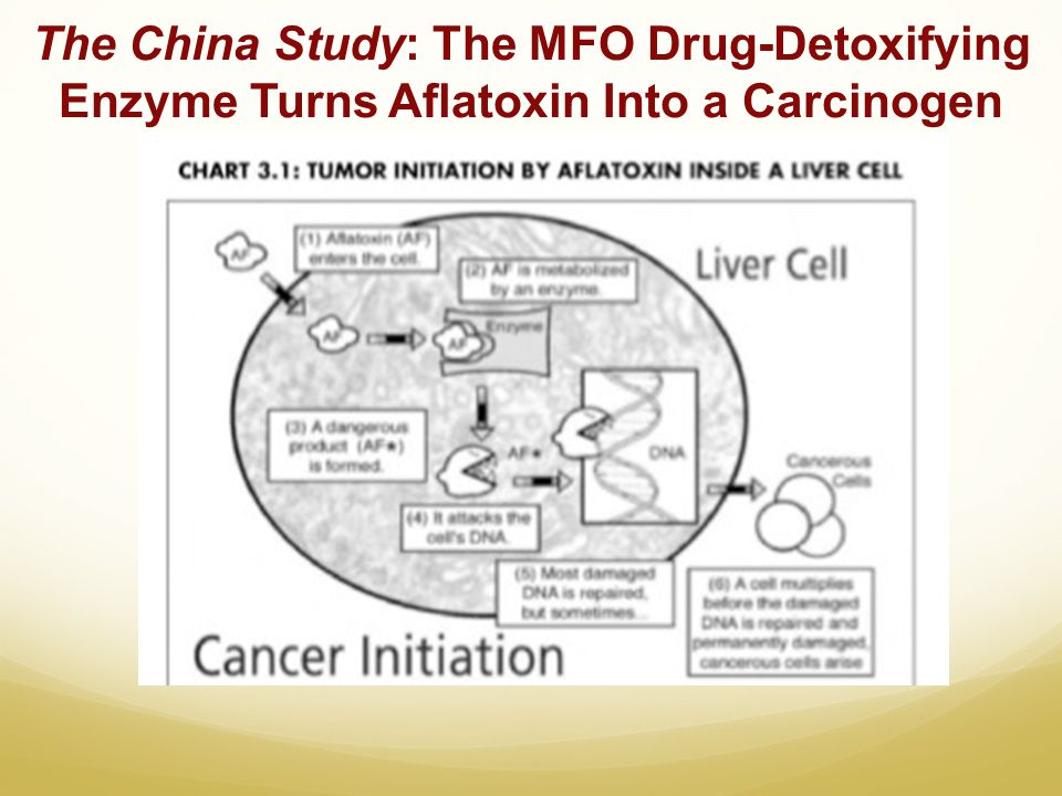 The China Study: The MFO Drug-Detoxifying Enzyme Turns Aflatoxin Into a Carcinogen