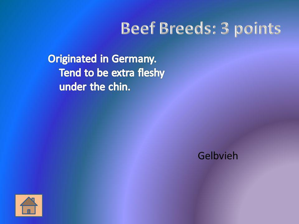 Beef Breeds: 3 points Originated in Germany. Tend to be extra fleshy under the chin. Gelbvieh