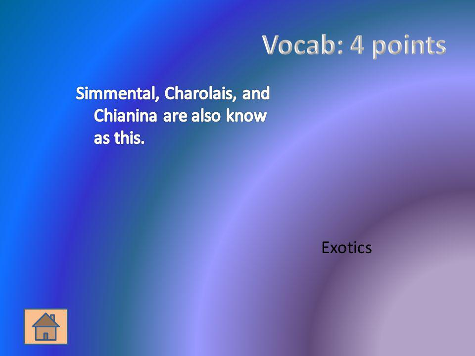 Vocab: 4 points Simmental, Charolais, and Chianina are also know as this. Exotics