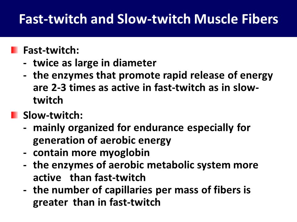 Fast-twitch and Slow-twitch Muscle Fibers
