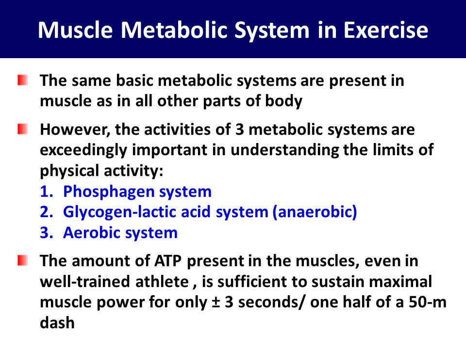 Muscle Metabolic System in Exercise
