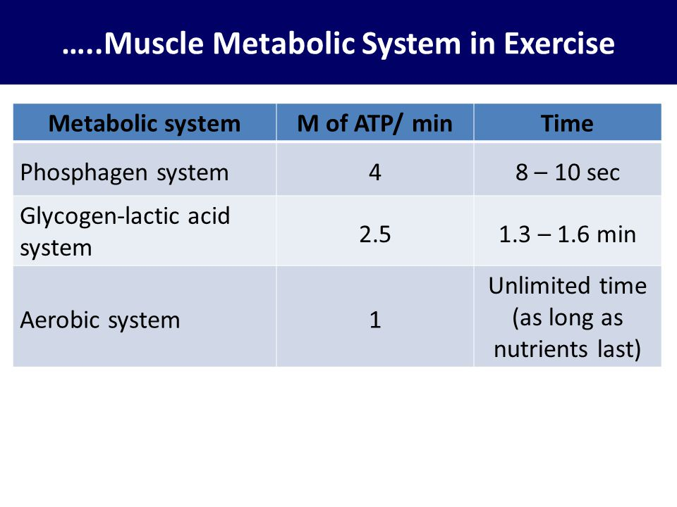 …..Muscle Metabolic System in Exercise