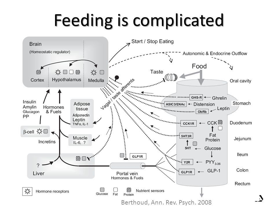 Feeding is complicated
