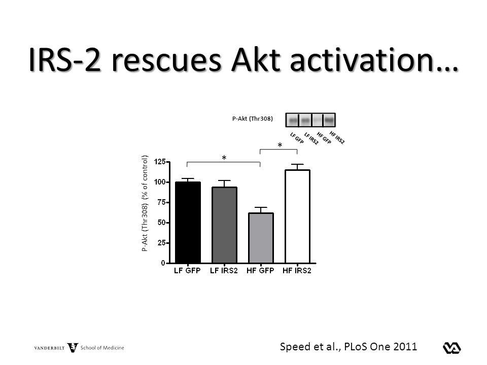 IRS-2 rescues Akt activation…