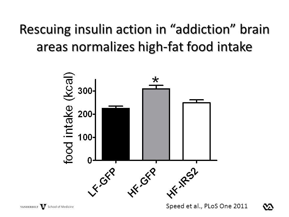 Rescuing insulin action in addiction brain areas normalizes high-fat food intake