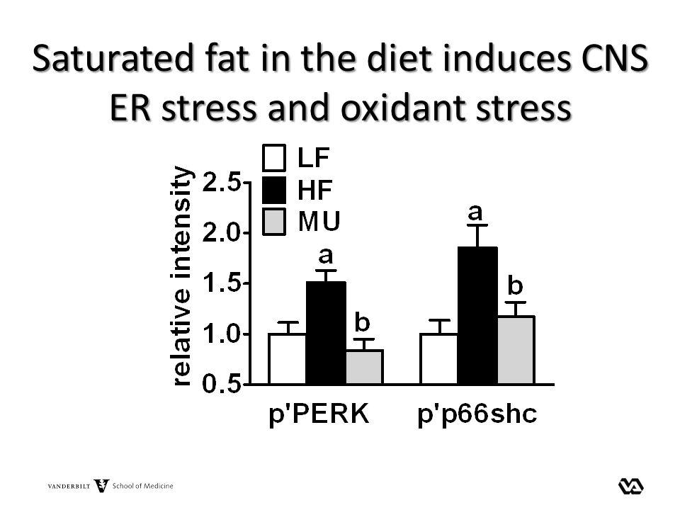Saturated fat in the diet induces CNS ER stress and oxidant stress