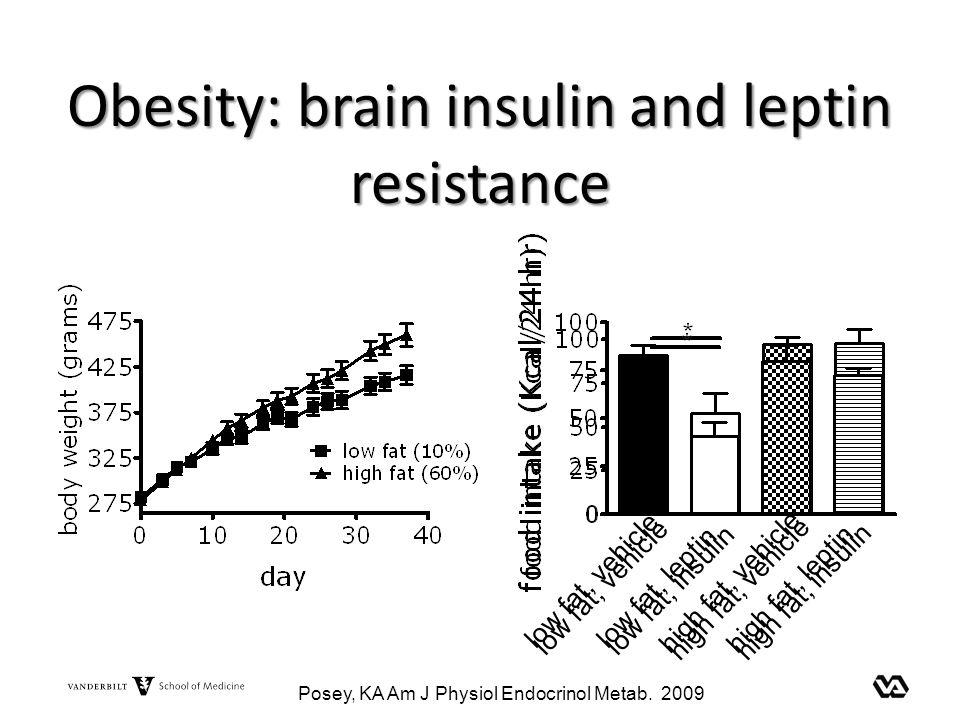 Obesity: brain insulin and leptin resistance