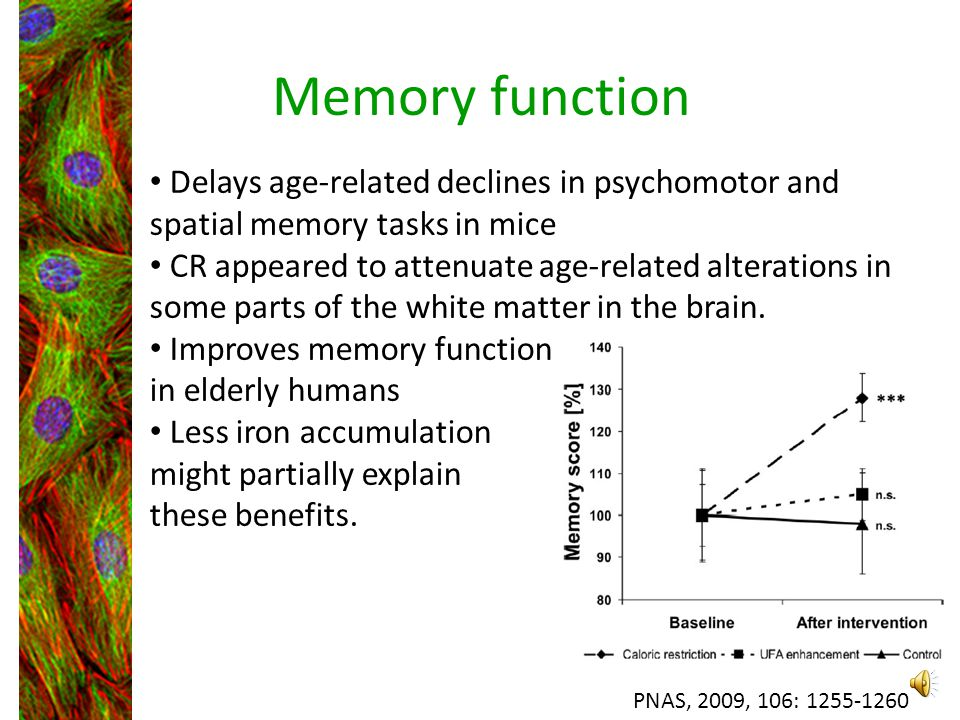 Memory function Delays age-related declines in psychomotor and spatial memory tasks in mice.