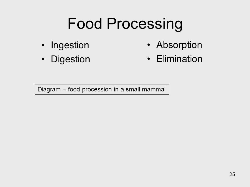 Food Processing Ingestion Absorption Digestion Elimination
