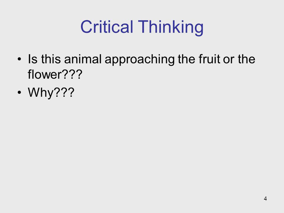 Critical Thinking Is this animal approaching the fruit or the flower Why