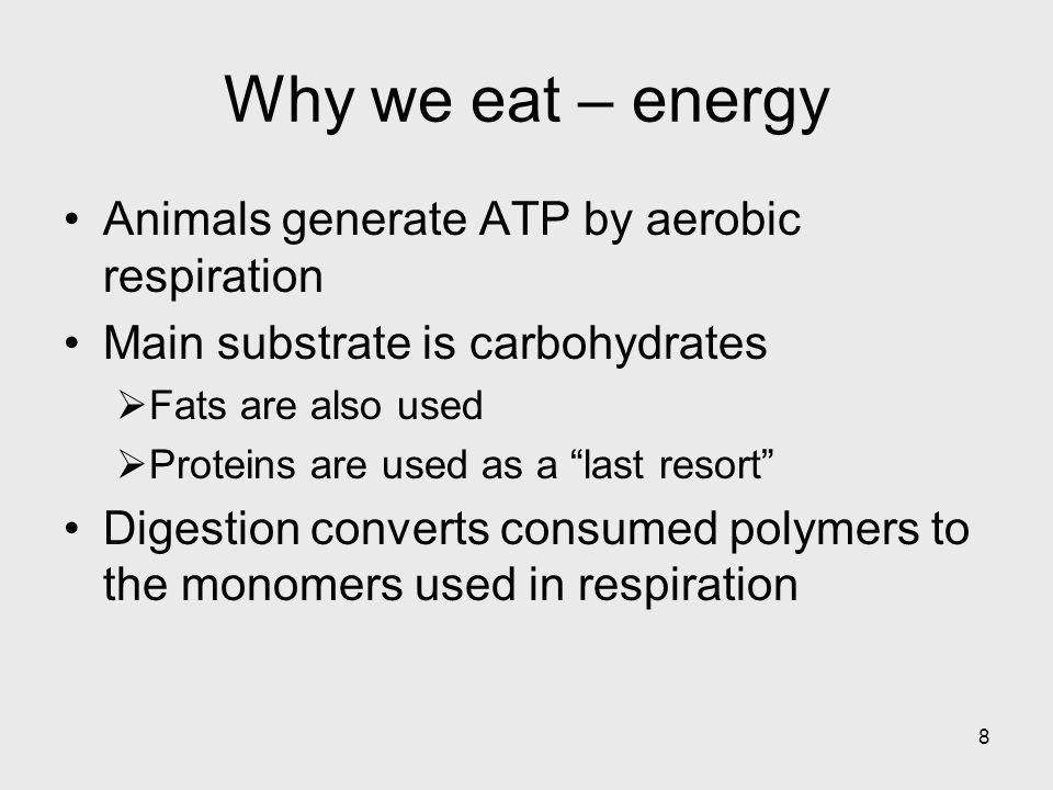 Why we eat – energy Animals generate ATP by aerobic respiration