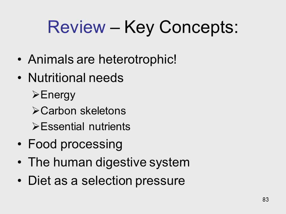 Review – Key Concepts: Animals are heterotrophic! Nutritional needs