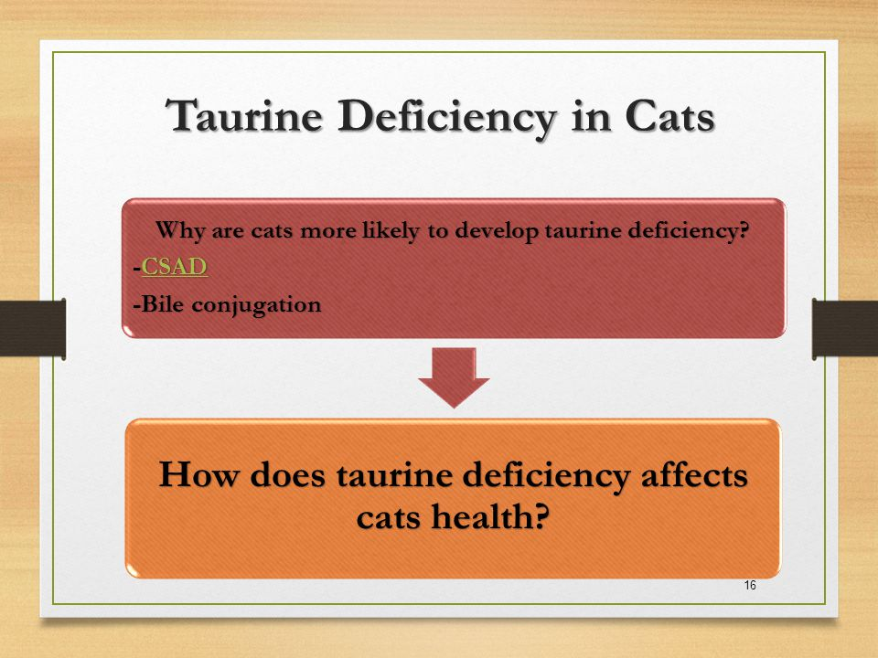 Taurine Deficiency in Cats