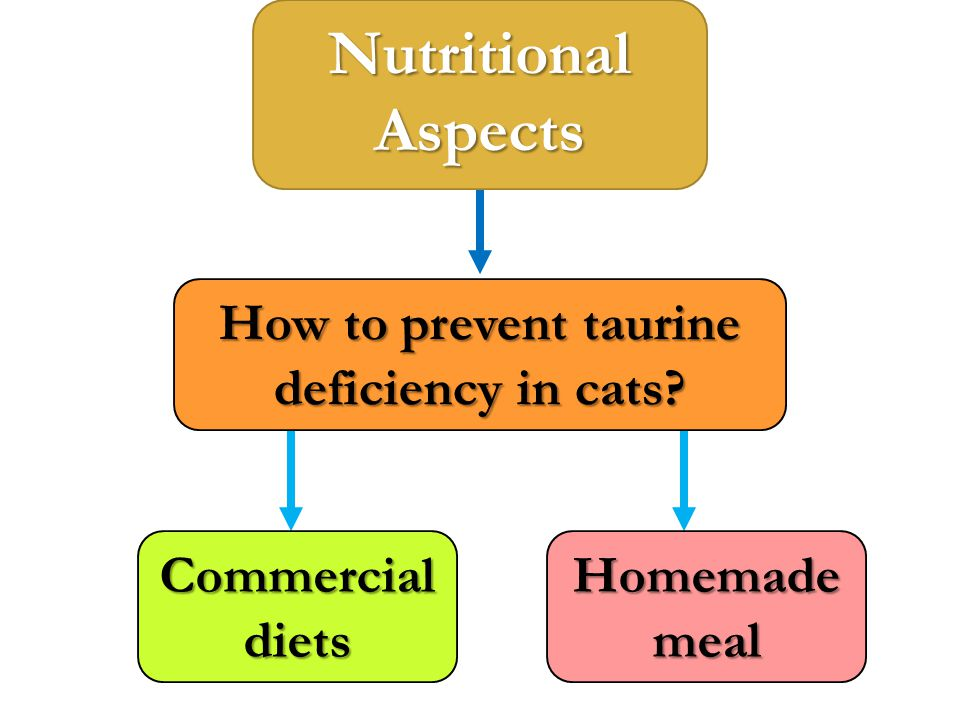 How to prevent taurine deficiency in cats