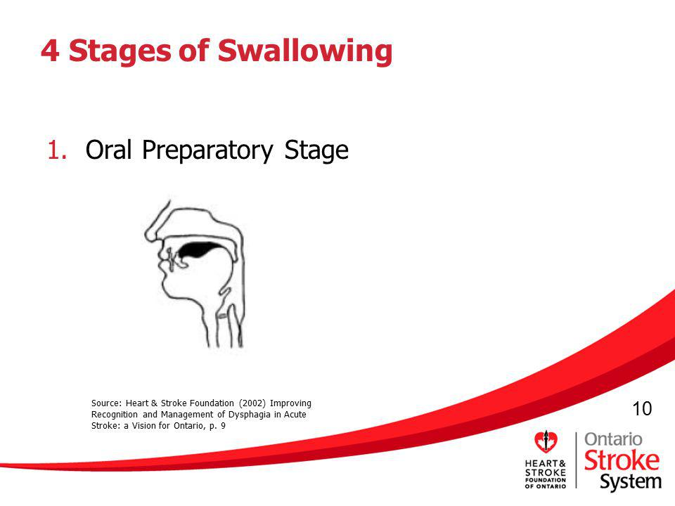4 Stages of Swallowing Oral Preparatory Stage