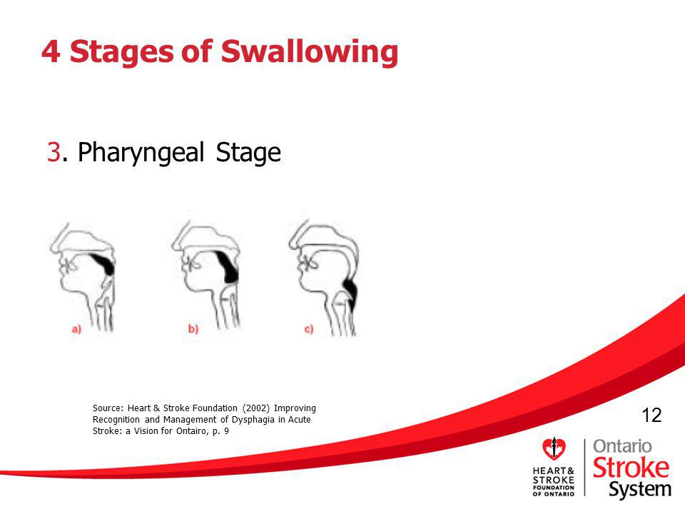 4 Stages of Swallowing 3. Pharyngeal Stage