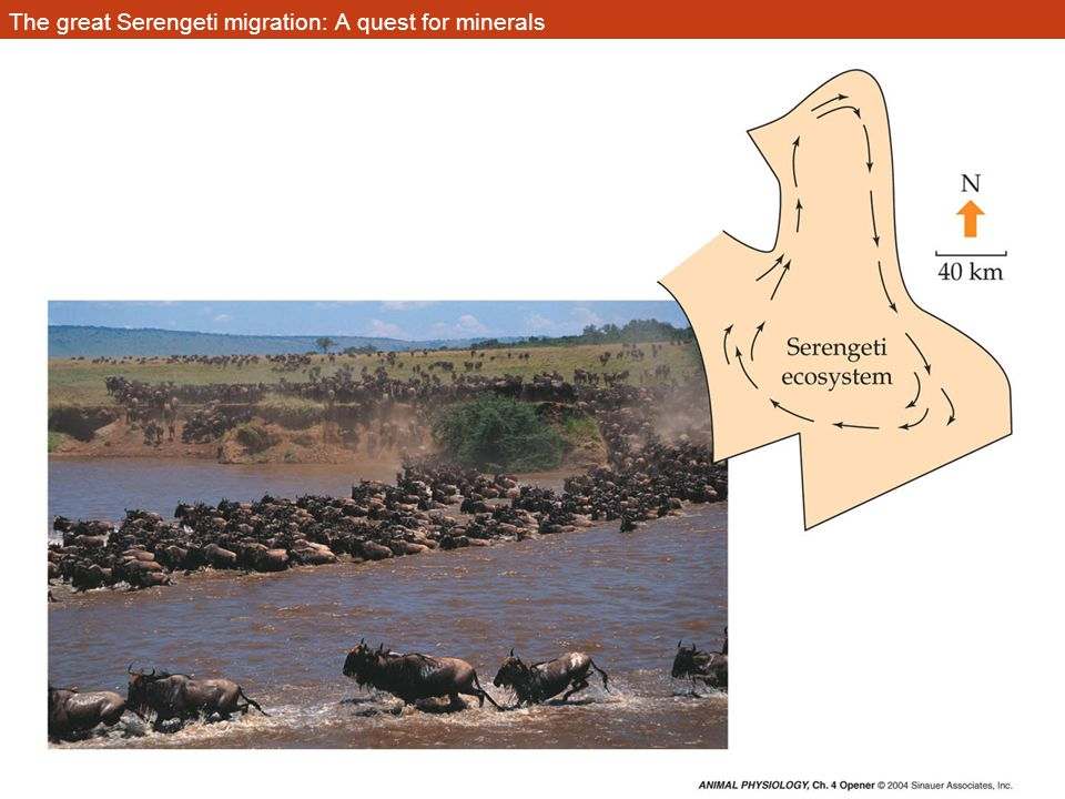The great Serengeti migration: A quest for minerals
