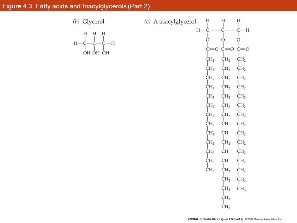 Figure 4.3 Fatty acids and triacylglycerols (Part 2)