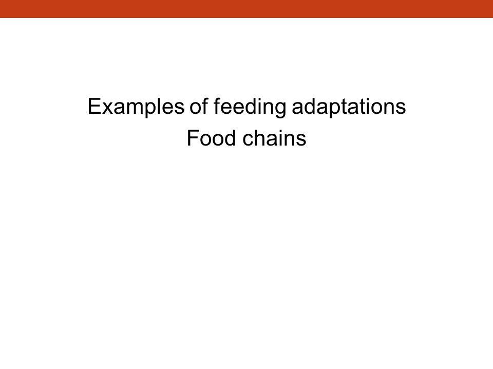 Examples of feeding adaptations Food chains