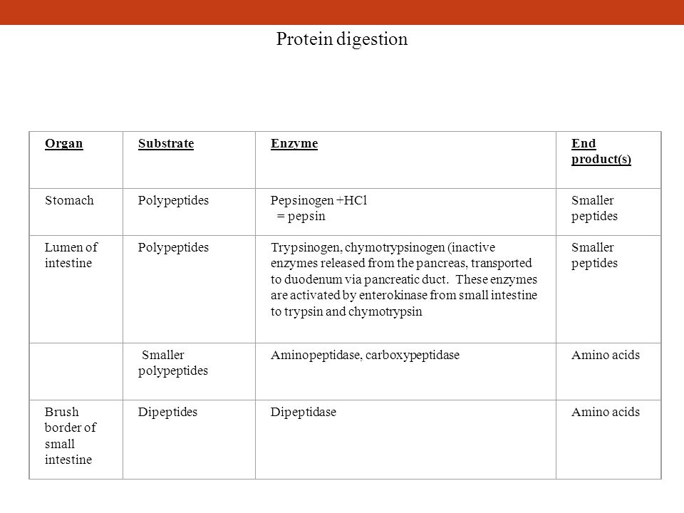 Protein digestion Organ Substrate Enzyme End product(s) Stomach