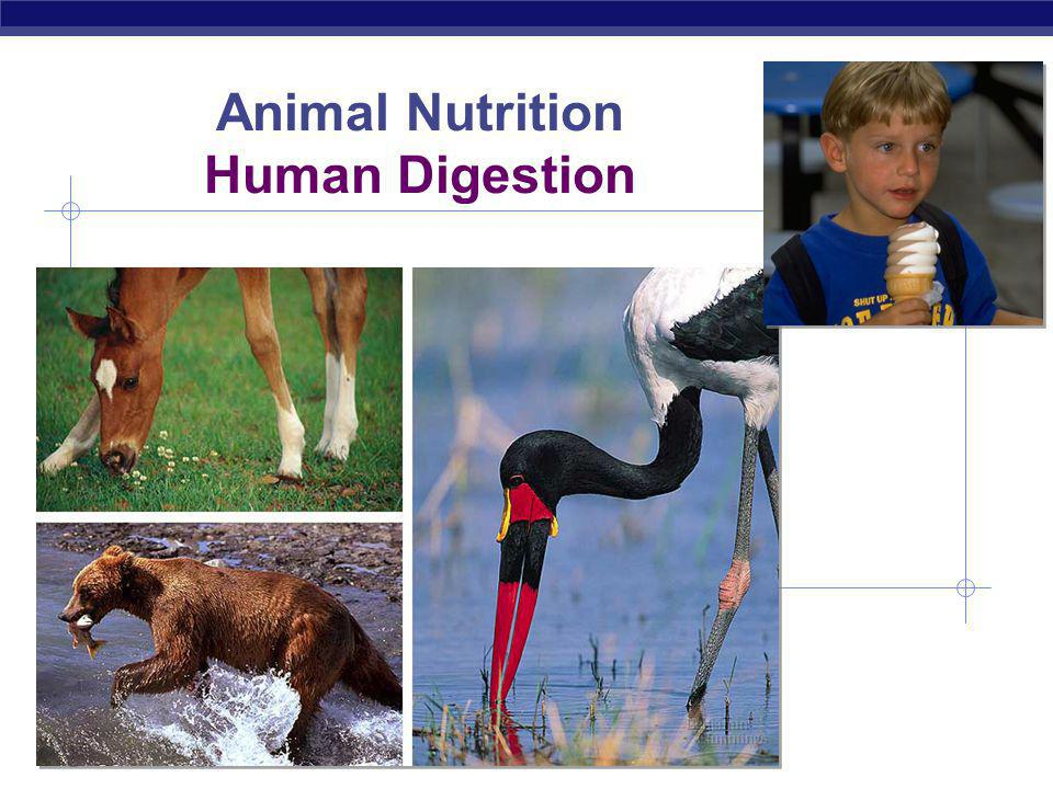 Animal Nutrition Human Digestion