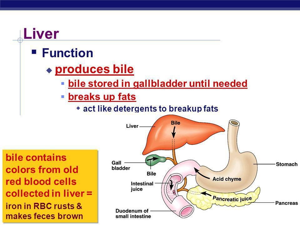 Liver Function produces bile bile stored in gallbladder until needed