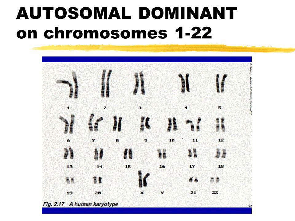 AUTOSOMAL DOMINANT on chromosomes 1-22
