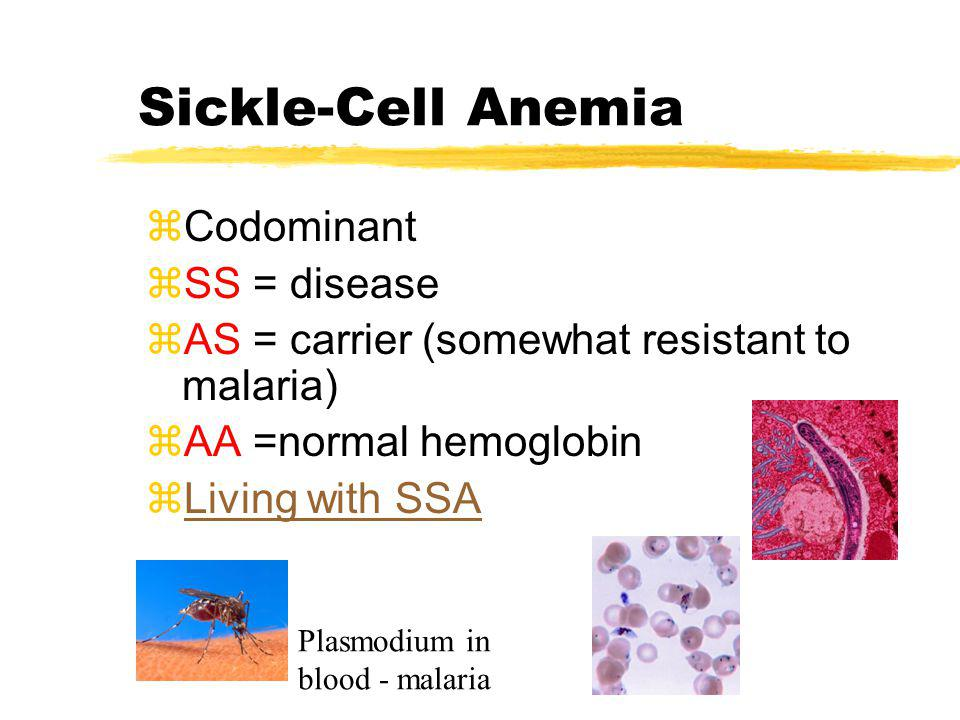Sickle-Cell Anemia Codominant SS = disease