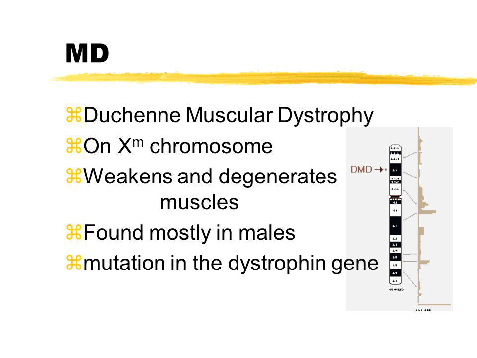 MD Duchenne Muscular Dystrophy On Xm chromosome