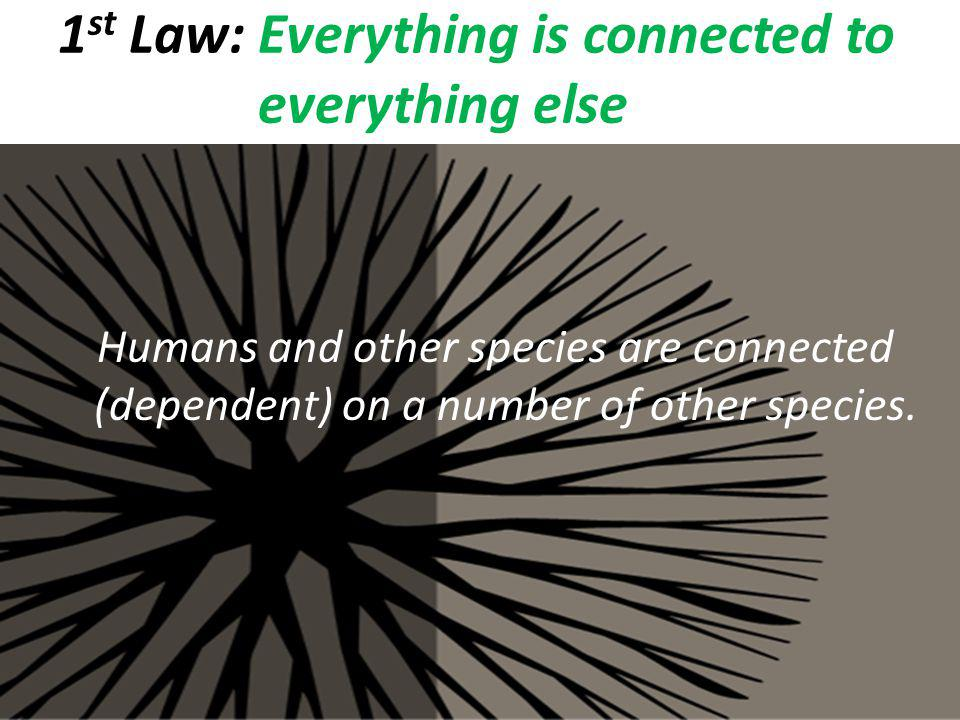 1st Law: Everything is connected to everything else