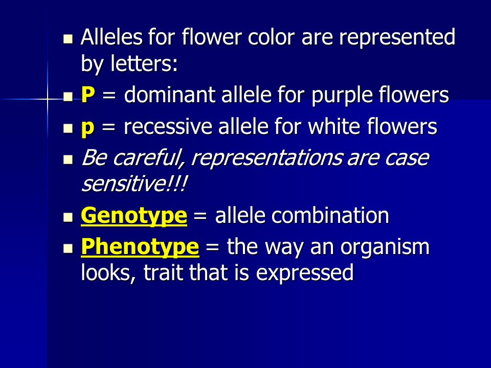 Alleles for flower color are represented by letters: