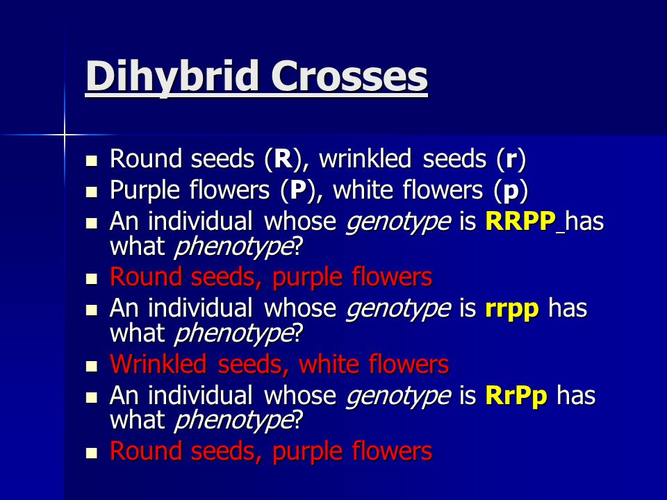 Dihybrid Crosses Round seeds (R), wrinkled seeds (r)